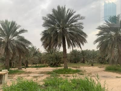 Other Commercial  للبيع في العوير، دبي - Large farm with villa for sale in Al Awir 1