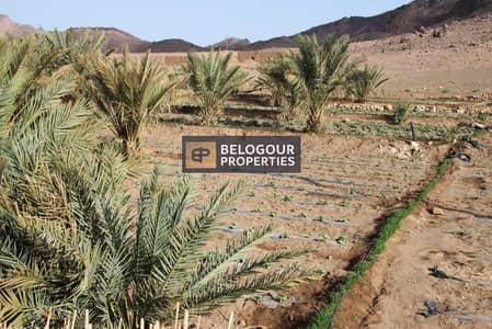 ارض استخدام متعدد  للبيع في الخوانیج، دبي - LAND FOR SALE /KHAWANEEJ