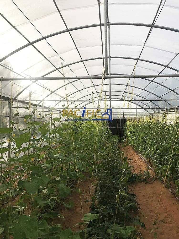10 Cottage Farmhouse for rent in Dubai