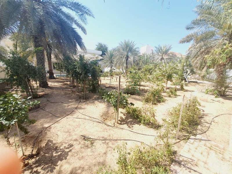 30 modern big independent villa  in Jumeirah 1 rent is 800k