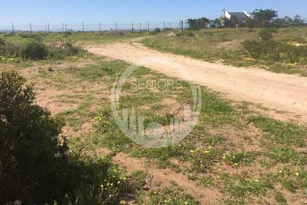 Other Commercial  للبيع في الباھیة، أبوظبي - Good way to Invest! Huge Farm in Al Bahia