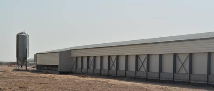 Other Commercial for Sale in Al Buraymi, Al Ain - Farm for sale in Al Ain