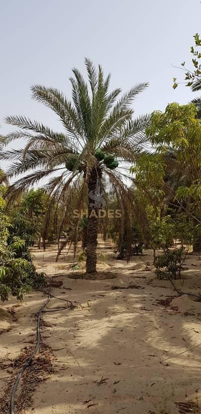 Plot for Sale in Al Raha Beach, Abu Dhabi - Agriculture Farm For Sale in Al Rahba AB