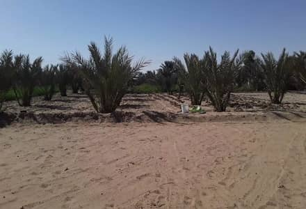 Other Commercial 3 غرف نوم للبيع في سويحان، أبوظبي - عقارات تجارية اخرى في سويحان 3 غرف 2500000 درهم - 4786415