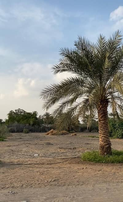 Other Commercial for Sale in Al Dhaid, Sharjah - Farm for sale in Al Dhaid (Elever 1) on the new Khorfakkan road